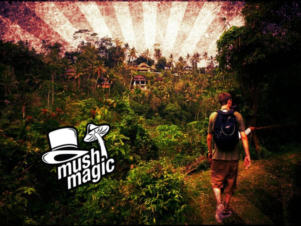 Bali & Magic Mushrooms: Ein Trip in den Tropen