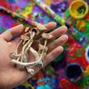 Können Zauberpilze Deine Kreativität Verbessern?