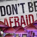 Warum Man Auf Pilzen Keine Angst Vor Einem Horror-Trip Haben Muss