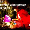 Die 25 Geläufigsten Psilocybinhaltigen Pilze In Freier Natur